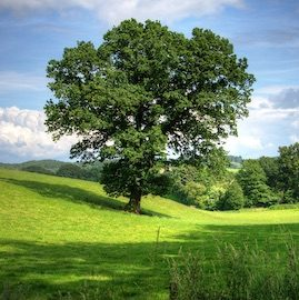 Tree Preservation Orders Lytchett Matravers Dorset