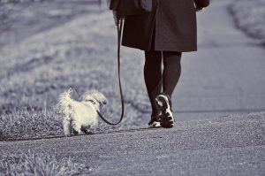 Photo of a woman walking a dog