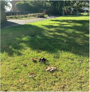 Photo of dog mess on LM Rec